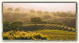 Monterey County Wine Region 4