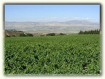Monterey County Wine Region 5