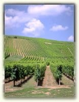 Monterey County Wine Region 6