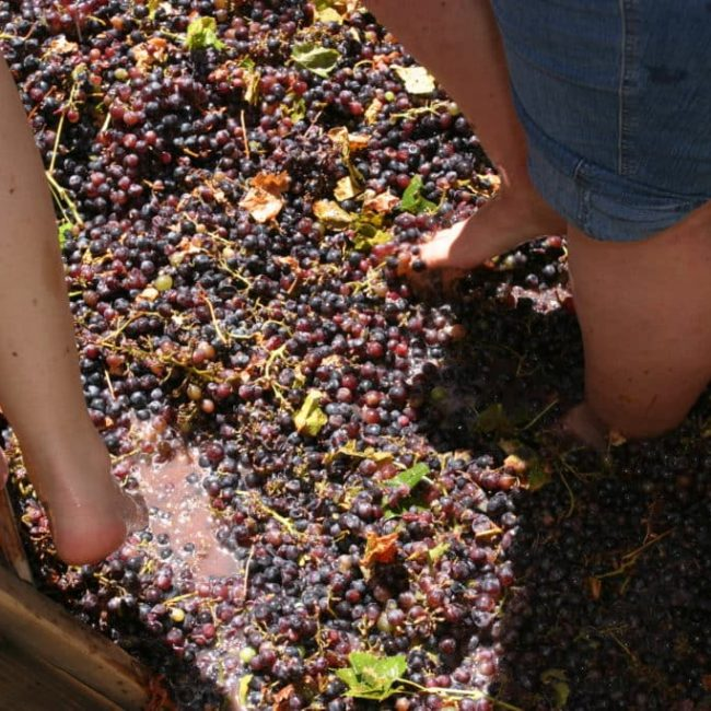 Soledad Mission Fiesta – featuring Grape Stomping